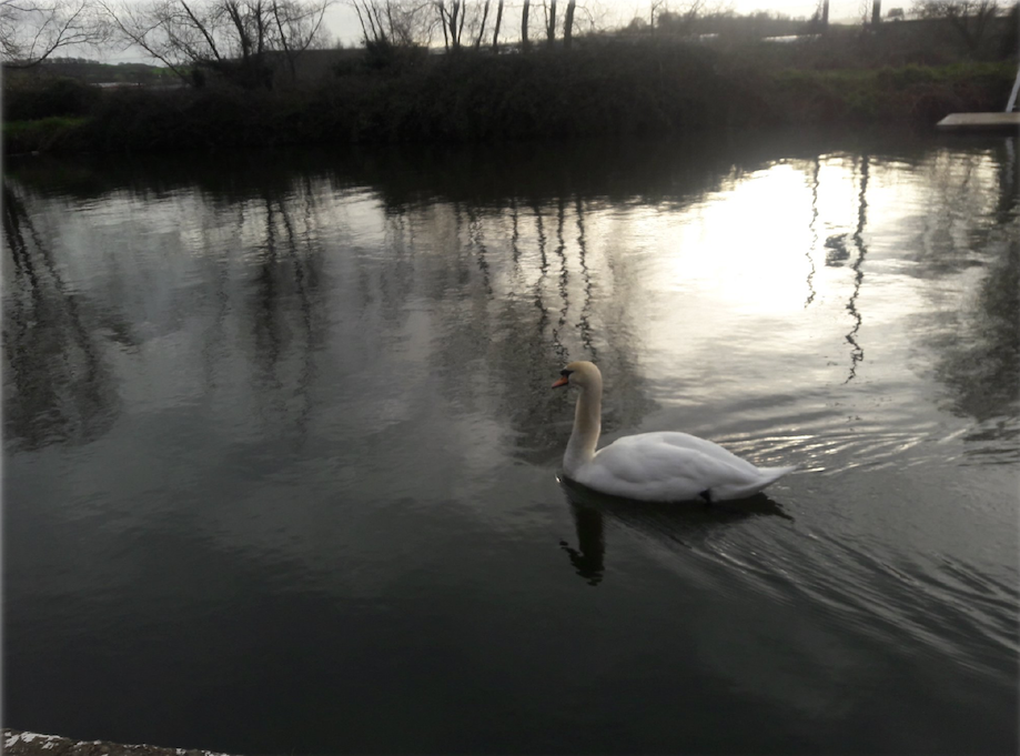 """Available Light"" by Sandy Coomer, ""Swan"" by Rinat Harel"